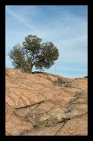 Lone Tree on the Rocks by 16stepper