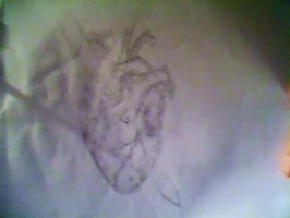Anatomically correct Heart by BloodyXxBanshee