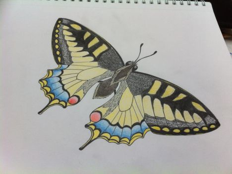 Mariposa a color by JohnKeyes
