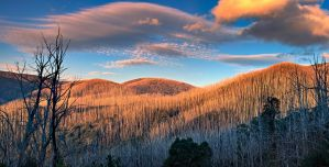 The Burnt Forest by MarkLucey