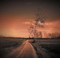 Lonely tree by LuGiais