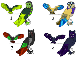 Owl Adopts- Set 01- ALL SOLD by MWGadopts