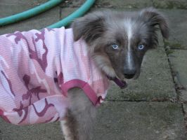 Willow In Pink by dottypurrs