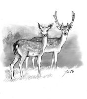 fallow deer by theOvercoat
