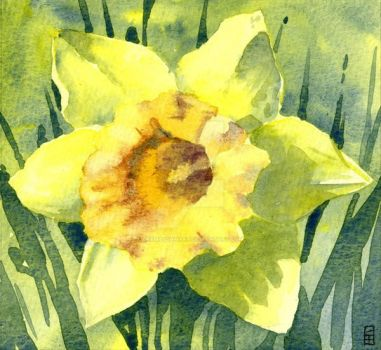 Spring Daffodil - Watercolours by GeeMassamArt