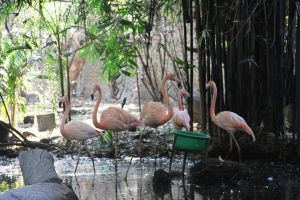 Flamingos by deliquescing
