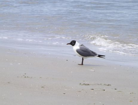 Solitary Gull 2 by ArtistMaryAlice