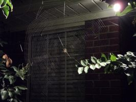 Spider Web by f14ace