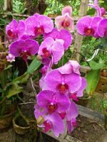 orchids galore by plainordinary1