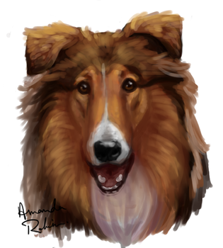 Rough collie by QueerCoyote