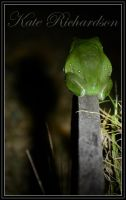 Green tree frog by DesignKReations