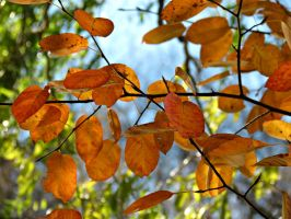Orange Leaves .. by Michies-Photographyy