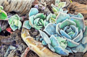 Succulent study by KingVahagn