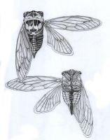 Cicada study by biomechanoid56