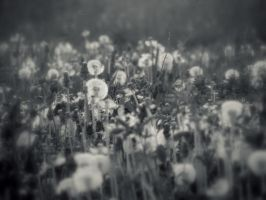 course toward the sea of dandelions 4 by snusmumrikenn