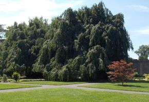 The Big shade tree of Untermeyer Park, Yonkers, NY by Bizee1