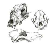 Canine Skull by oxpecker