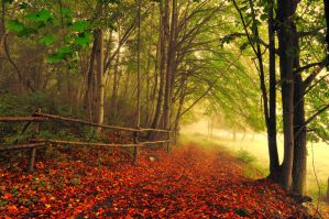 This autumn morning by tomsumartin