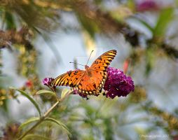 Mystical butterfly by flowersteph