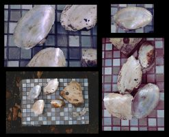 Collage of the Clam Shells by MTJforever