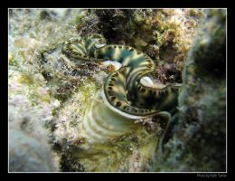 Clam in the coral by Keith-Killer