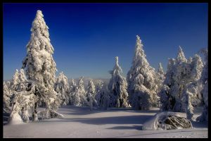 colours of winter by stg123