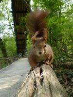 Squirrel 217 by Cundrie-la-Surziere