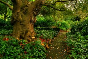 Geelong Botanical Gardens by daniellepowell82