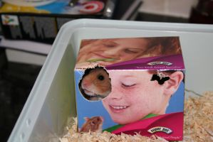 New Baby Hamster by tammyins