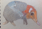 Colored Elephant Shrew by GaymerJosh