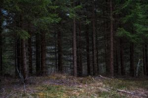 Deep in the forest by RavensLane