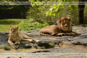 A Gentleman and his Lady by FicktionPhotography