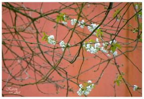 Spring time again by Buble