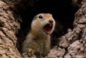 Gopher Hole by KSPhotographic
