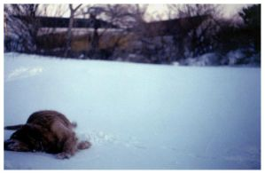 a death in the desert of snow by mister-e