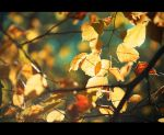 Autumn has come by Dmitriyphoto