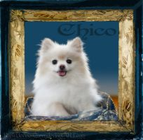 Chico by QueenDevious
