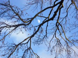 Moon and Tree Stock by Meta-Stock