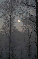Moon in the forest by bartekastro