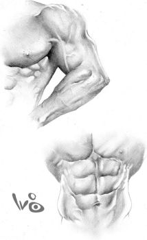muscle studies by WaltBarna