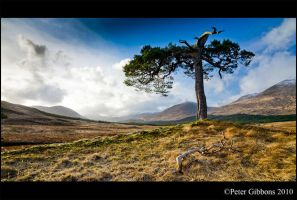 Scottish Moorland Tree 1 by Photo-Joker