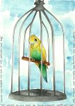 The Little Budgerigar by SS-Chan