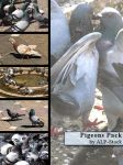 Pigeons Pack by ALP-Stock