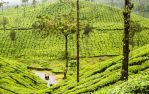 Tea Hills of South India by elfproject