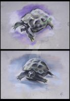 The tortoise by ElenaNaylor