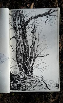 Sketch Forest 3 by Tottor