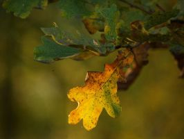 Oak Leaf by lsaknn