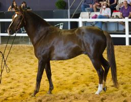 STOCK - 2014 Total Equine Expo-91 by fillyrox