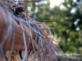 Pine Straw III by chelsea2435