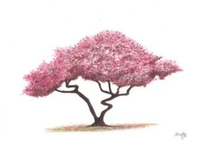 Maple Tree by aakritiarts